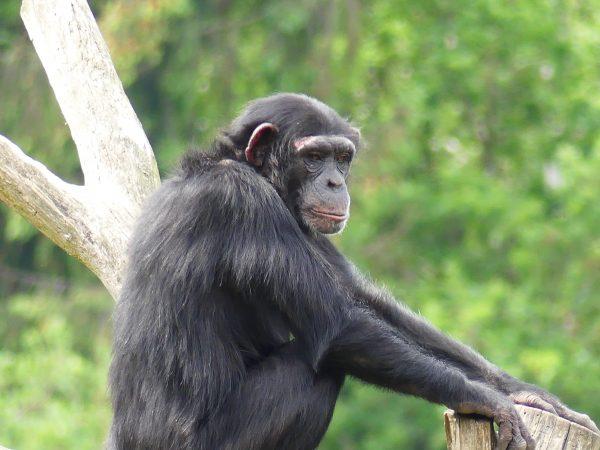 Arrêt Kipling c/ EUIPO : le singe remporte la bataille !